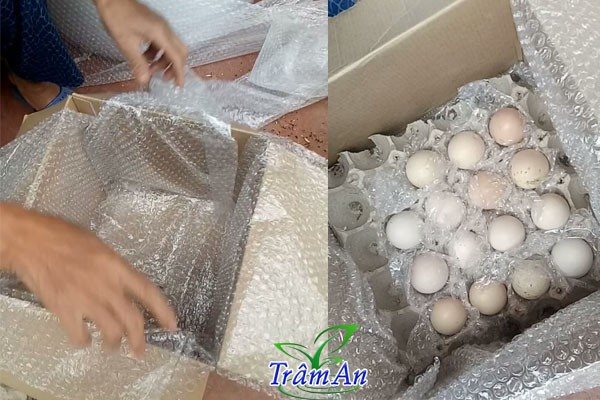 Bọc trứng gà chọi