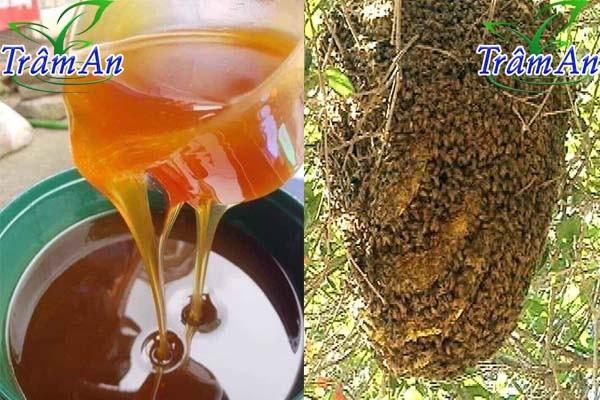 mật ong rừng có còn không