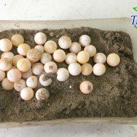 Trứng ba ba chuẩn