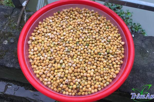 Hạt đậu Hà Lan ngâm nước