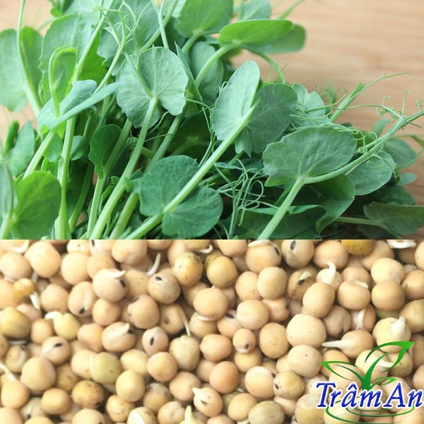 Hạt giống đậu hà lan ăn mầm