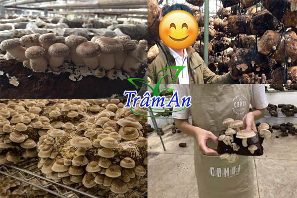 Xưởng nấm hương tươi