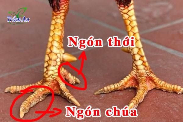 Bàn chân gà